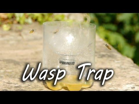How To Make A Simple Wasp Trap