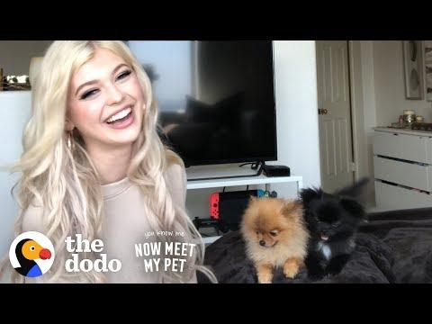 Puppy Who Almost Died Beat All The Odds With Loren Gray | The Dodo You Know Me Now Meet My Pet