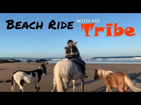A Beach Ride with My Tribe - |Pony |Donkey |Shetland |Cat |Dog