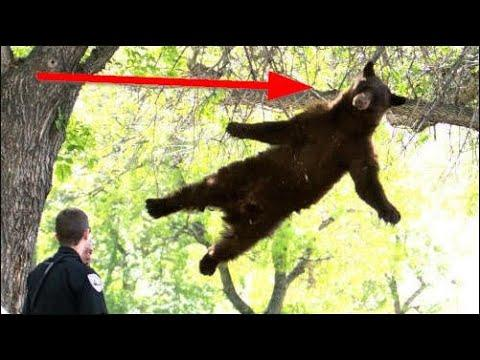 BIGGEST Animals That Climb Trees