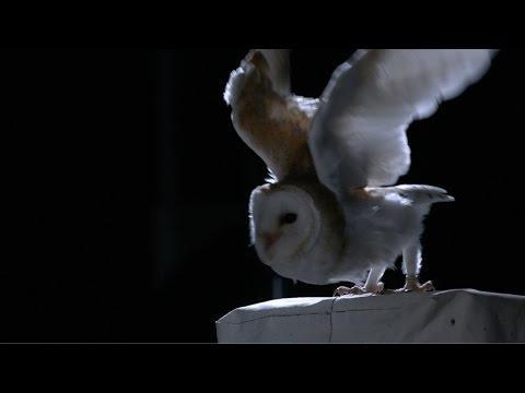 The Silent Flight Of An Owl - Natural World: Super Powered Owls