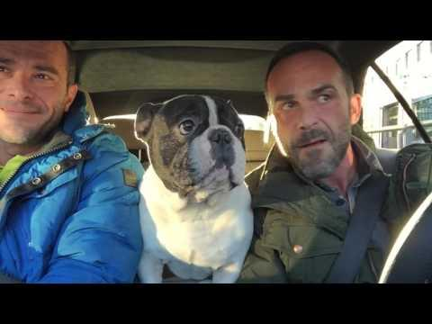 Junior The French Bulldog - Diamonds In The Sky