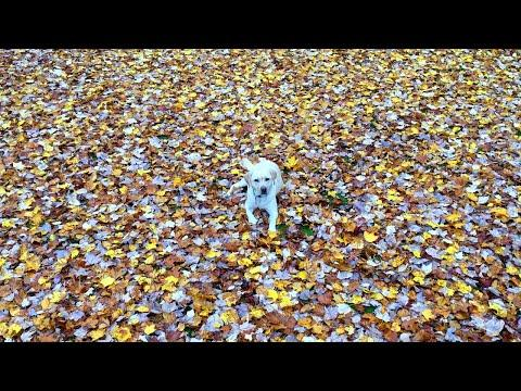 Mabel's First Leaf Pile Video!