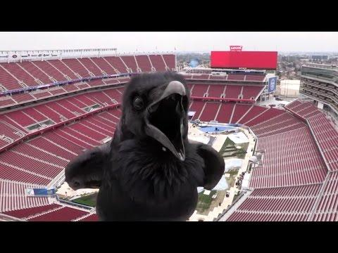 Hilarious! - Raven Puts On A Show For Stadium Webcam