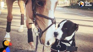 Dog Thinks He's Actually A Horse | The Dodo Odd Couples
