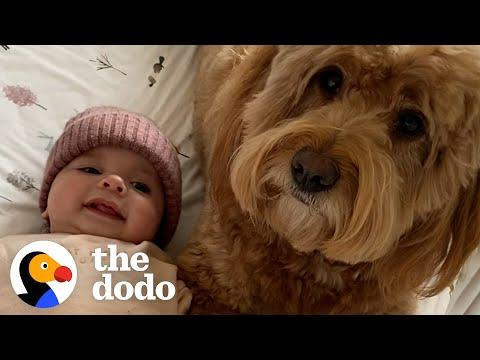 Dog Teaches His Baby Sister How To Crawl #Video