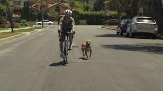 How To Ride A Bike With Your Dog