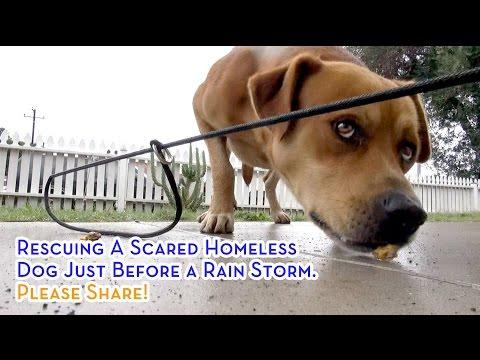 Rescuing A Scared Homeless Dog Just Before A Rain Storm