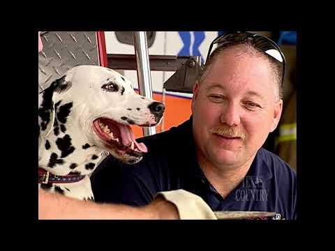 Sam the Three-Legged Fire House Dog Video