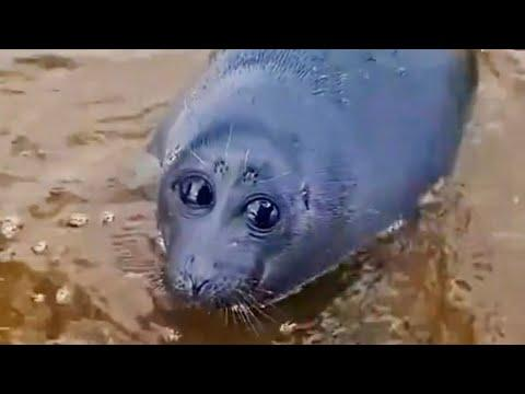 Russian Guy Finds Rare Sea Potato. Your Daily Dose Of Internet. #Video