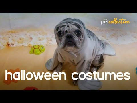Halloween Pet Costume Party