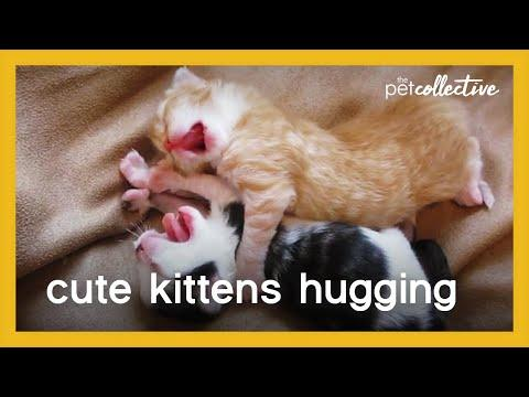 Cute Kittens Hugging Video