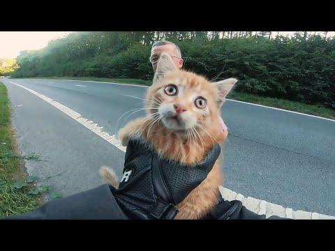 Biker Saves Kitten From Busy Road. Your Daily Dose Of Internet