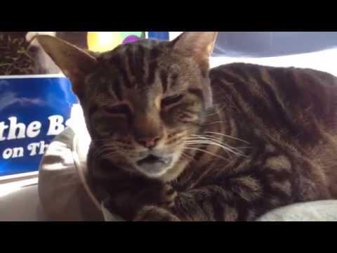 Weirdest Cat Noises