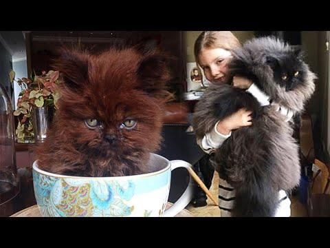 She Adopted a Strange Kitten, and One Year Later the Transformation Is Incredible! #Video