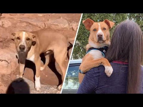 Clingy dog convinces hiker to become his mommy #Video