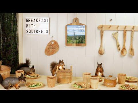 Breakfast With Squirrels and Calm Music for increased focus video