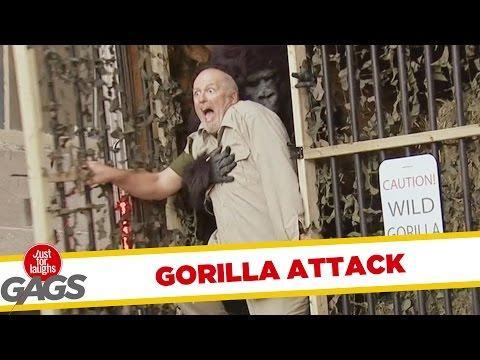 Wild Gorilla Attack Prank