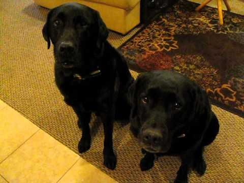Funny Dog Snitches On Sibling. Who Stole The Cookie?
