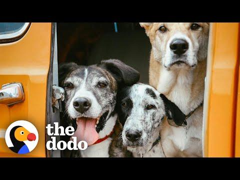 Puppy Found In Desert Becomes An Adventure Dog #Video