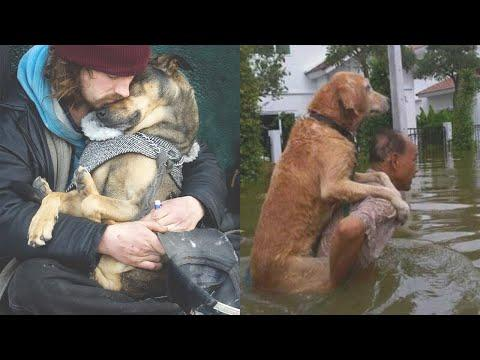 Moments Proving Dog Is A Special Friend Of Human! #Video