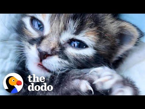 Woman Wasn't A Cat Person Video — Until She Met This Kitten