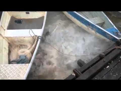 Feeding Piranhas In A River In Brazil