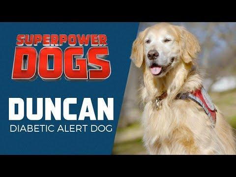Duncan: Diabetic Alert Dog | Superpower Dogs