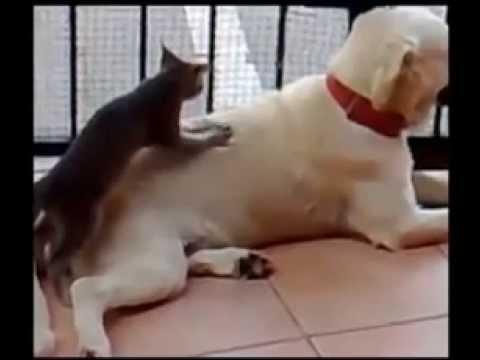 Priceless Pet Personalities!