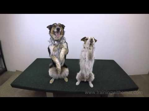 Jumpy And Dash In Sync HD 720p