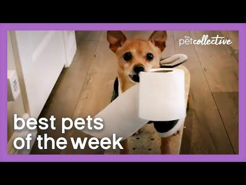 Special Delivery | Best Pets of the Week Video