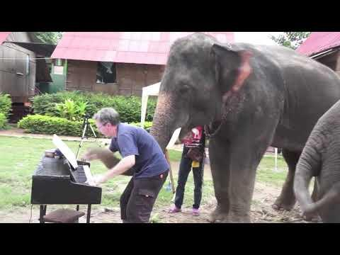 Animals reacting to musical instruments
