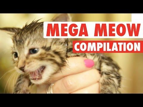 Mega Meows Compilation