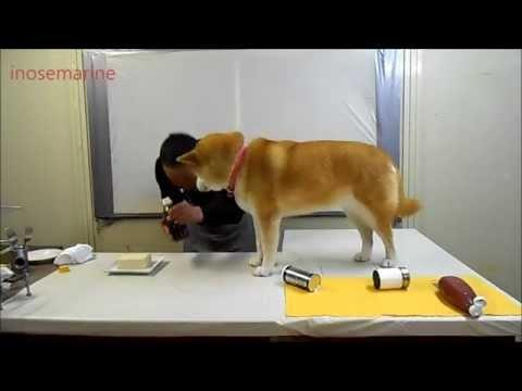 Hilarious! Dog Ruins His Human's Cooking Demonstration