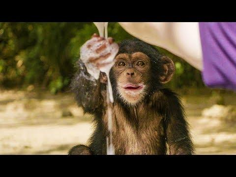 Baby Chimpanzees Playing With Bubbles   BBC Earth