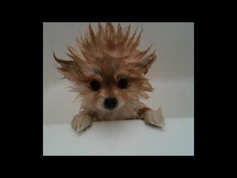 Dogs Just Don't Want To Bath - Funny Dog Bathing Compilation