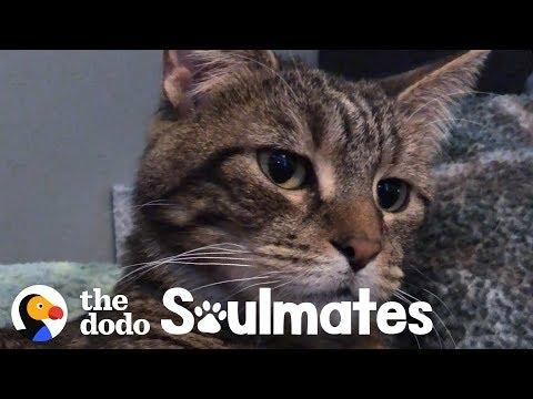 A Stray Sick Kitten Walked Into Family's Life | The Dodo Soulmates