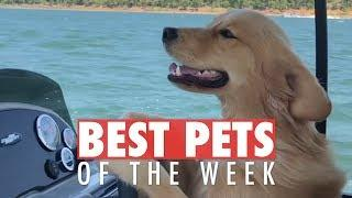 Best Pets of the Week | September 2018 Week 1