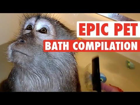 Epic Pet Baths Compilation