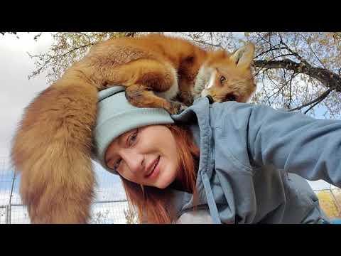 Finnegan's fox friends. SaveAFox Video