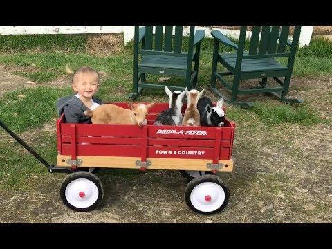 Cutest Wagon Ride Ever