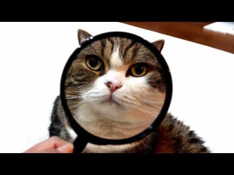 I see Maru with a magnifying glass