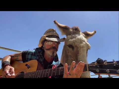 Donkey Named Lilly Loves Live Country/Blues Music at Folsom Prison Johnny Cash #Video