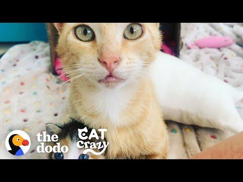 Smartest Stray Cat Follows Woman Home Video