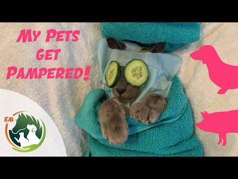 Emma's pets get PAMPERED | Cat | Dogs | Pony | and the PIG!