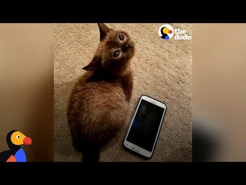 Blind Mini Cat Gives Her Mom Kisses - MILI | The Dodo