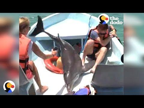 Dolphin JUMPS ON BOAT VIDEO