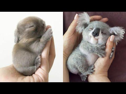 Cutest baby animals Videos Compilation Cute moment of the Animals - Cutest Animals #2