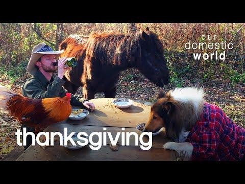 Pets Celebrate Thanksgiving Video