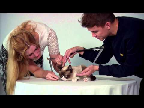 Grumpy Cat Tolerates Madame Tussauds Figure Sculptors